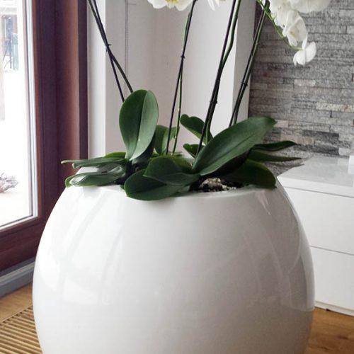 ASMAN M. Urban plant pot. Garden plant pot.
